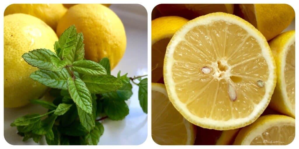 Homemade Italian Lemon Ice