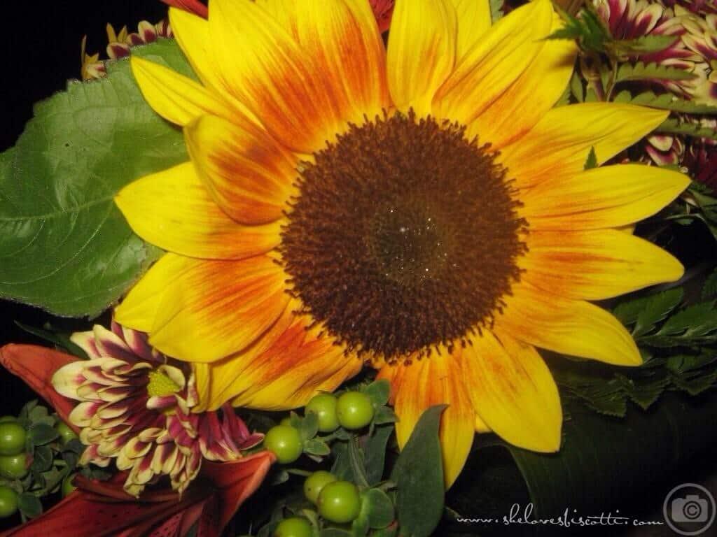 sunflower blog intro