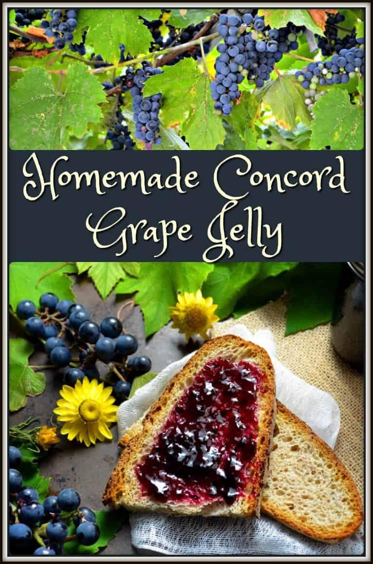 Homemade Concord Grape Jelly