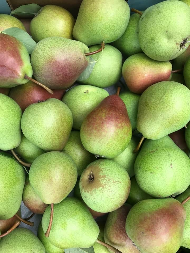 An overhead shot of dozens of blush pears.
