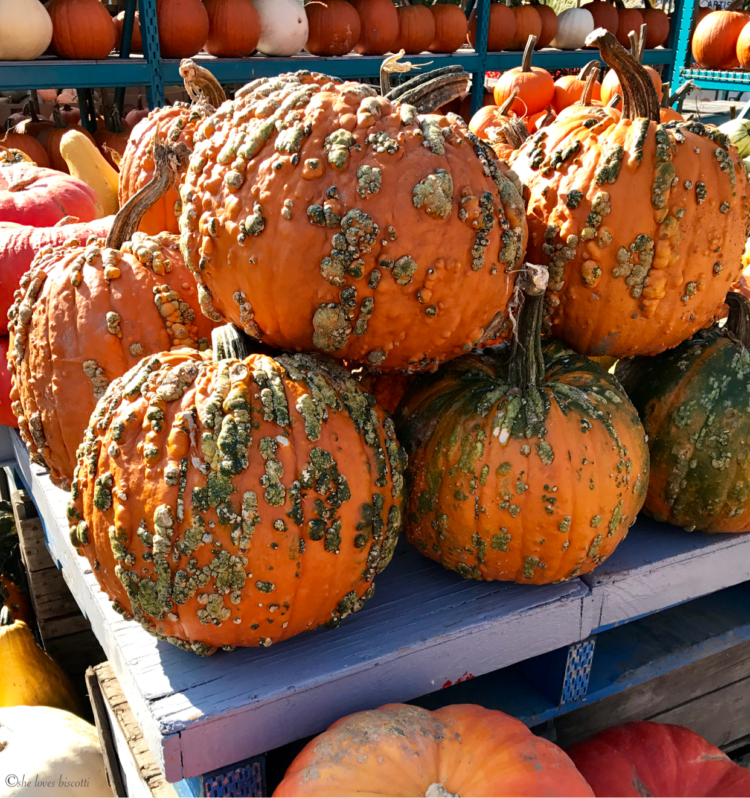 Pumpkins with warts are being diplayed on a bench at the farmers market