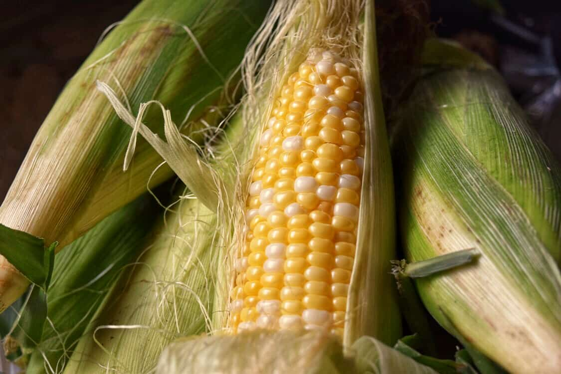 A cob of fresh sweet corn.