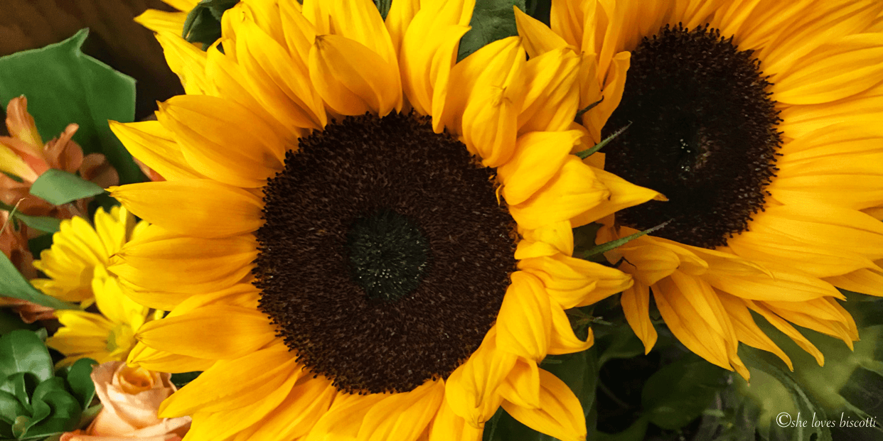 A picture of a sunflower.