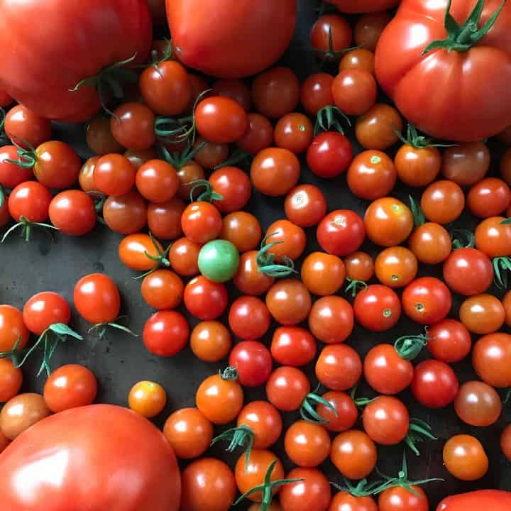 One green cherry tomato can be seen among dozens of bright red cherry tomatoes.