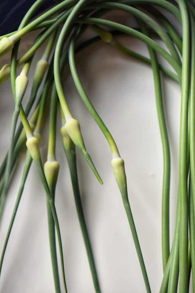 Fresh garlic scapes on a white background..