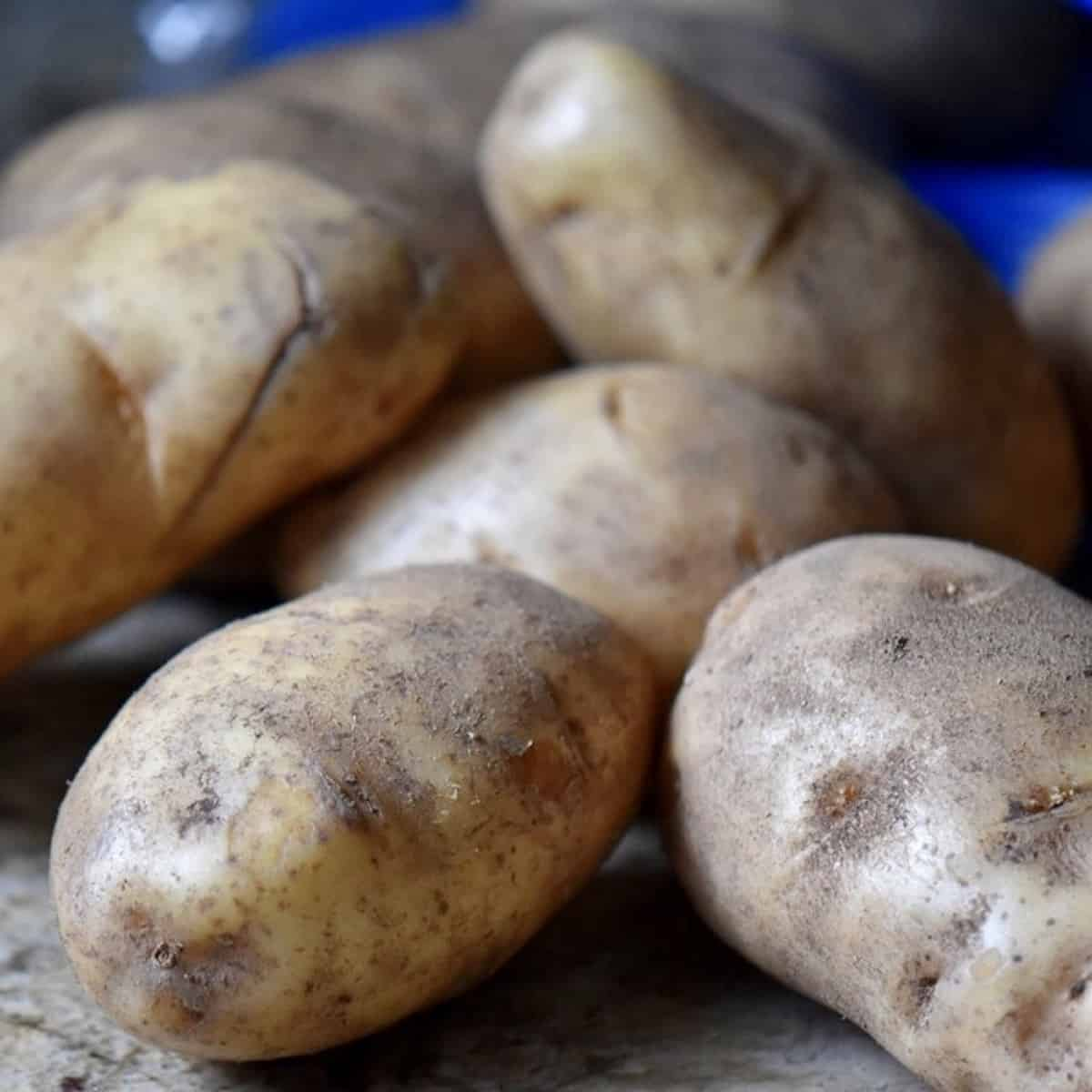 Whole russet potatoes.