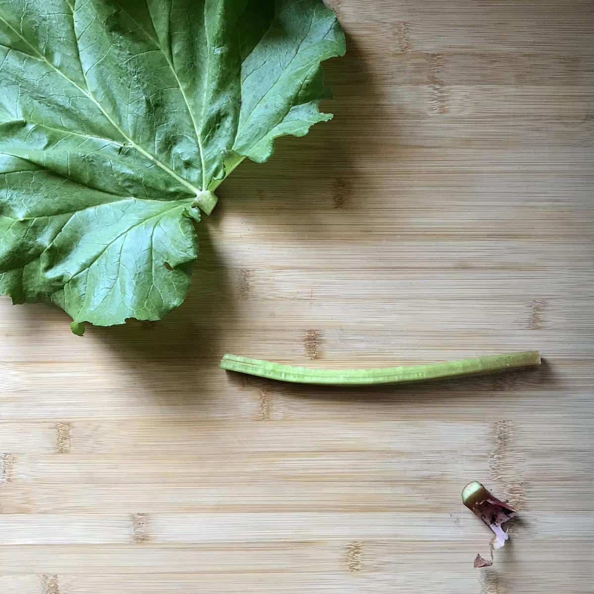 The leaf and root are cut off from the rhubarb stalk.