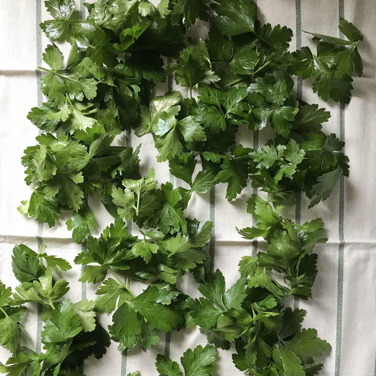Fresh parsley on a tea towel.