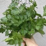 A handful of fresh parsley.