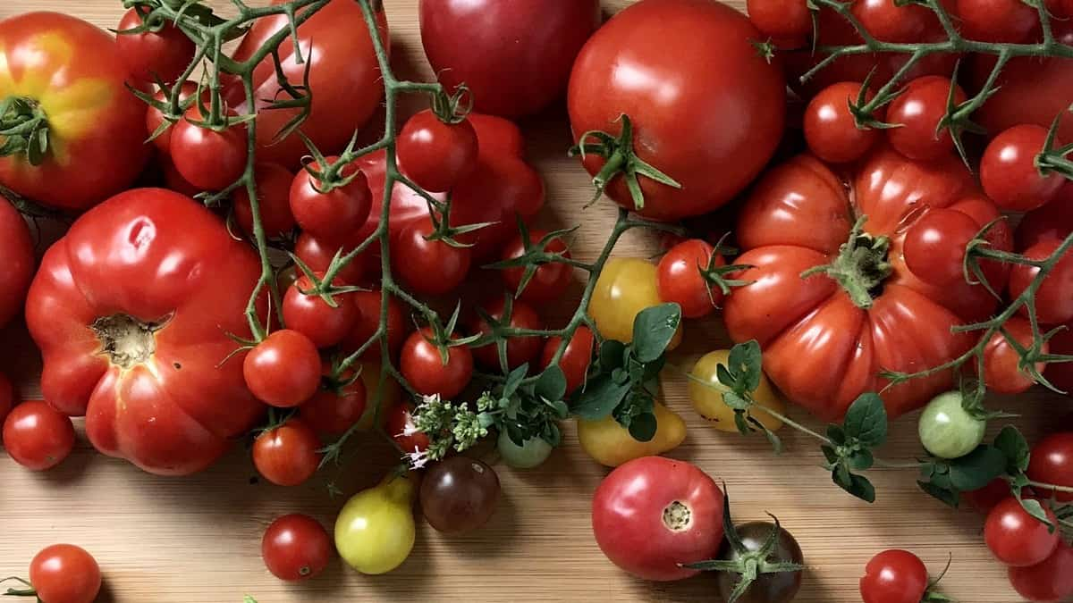 A variety of garden tomatoes on a wooden board.