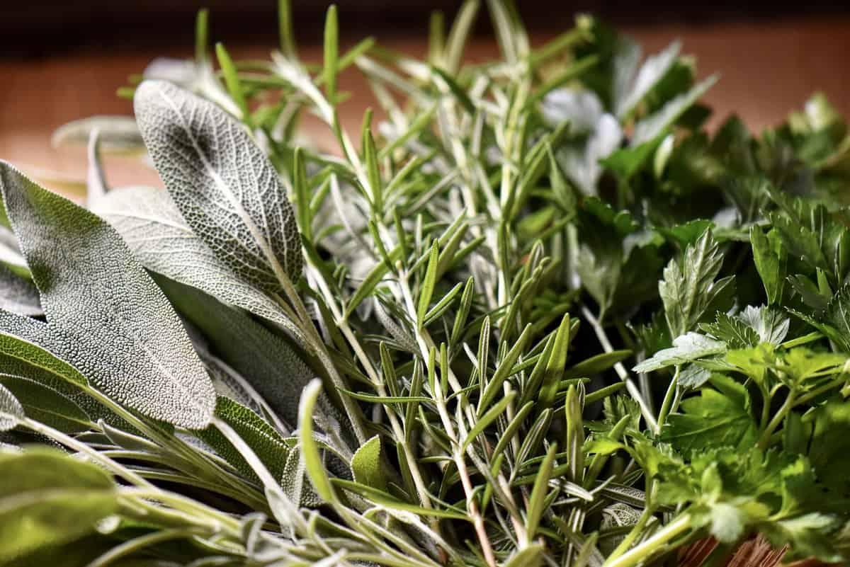 A close up photo of fresh herbs.